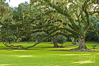 South Louisiana Photograph - Grand Lady by Scott Pellegrin