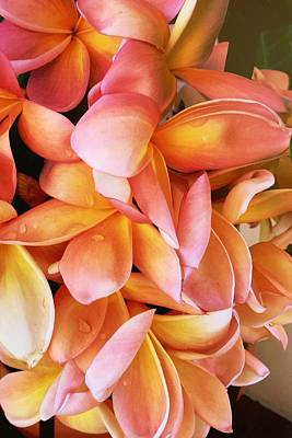 Obtusa Photograph - Grand Plumeria by Lynn Andrews