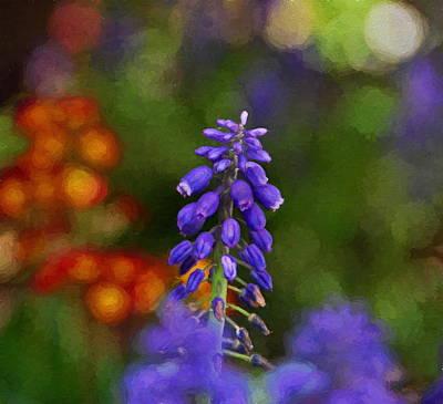 Photograph - Grape Hyacinth  by Andrea Kollo
