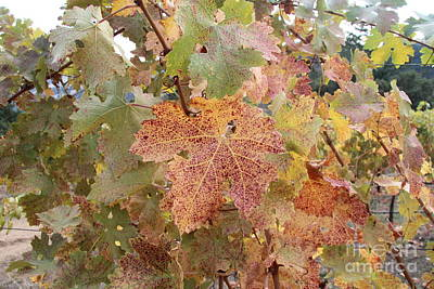Wine Photograph - Grape Leaves by Anthony Jones