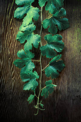 Vines Photograph - Grape Leaves by YoPedro