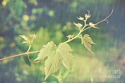 Grape Vine Against Summer Background Print by Sandra Cunningham