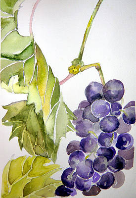 Grape Vine Print by Mindy Newman