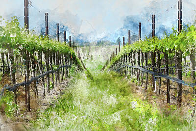 Grape Vines In Napa Valley California Print by Brandon Bourdages