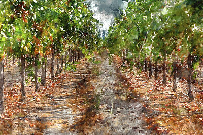 Grape Vineyard In Napa Valley California Print by Brandon Bourdages