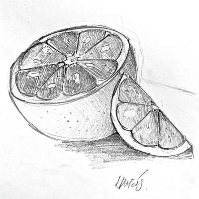 Grapefruit Drawing - Grapefruit by Klaudia Palas