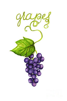Food And Beverage Drawing - Grapes by Cindy Garber Iverson