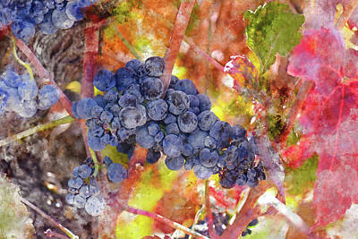 Napa Valley Digital Art - Grapes In The Vineyard by Brandon Bourdages