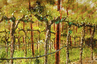 Wine Photograph - Grapes Vines In Vineyard During Spring by Brandon Bourdages