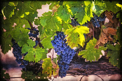 Grapevine With Texture Print by Garry Gay