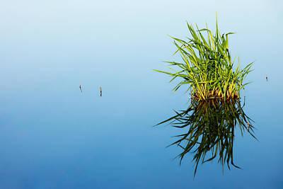 Grass In Blue Print by Todd Klassy