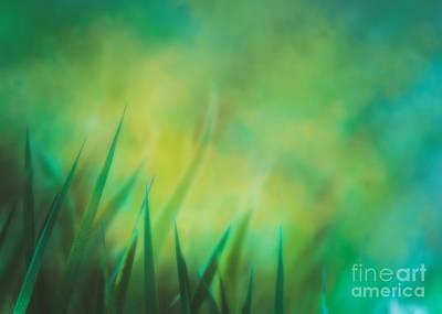 Grow Digital Art - Grass  by Mythja Photography