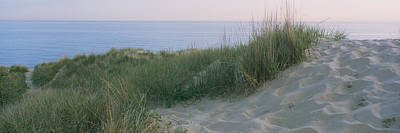 Indiana Scenes Photograph - Grass On A Sand Dune, Indiana Dunes by Panoramic Images