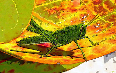 Grasshopper Digital Art - Grasshopper by David Lee Thompson