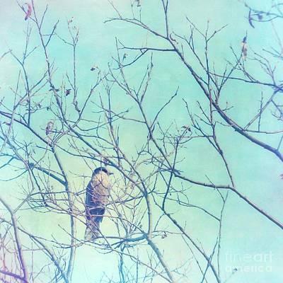Lensbaby Photograph - Gray Jay In A Tree by Priska Wettstein