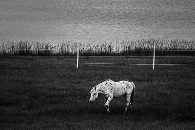 Photograph - Graze by Off The Beaten Path Photography - Andrew Alexander