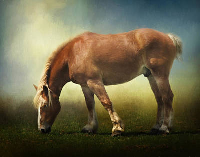 Belgian Draft Horse Photograph - Grazing Belgian by David and Carol Kelly