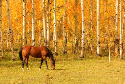 Horses Photograph - Grazing Horse In The Autumn Pasture by James BO  Insogna