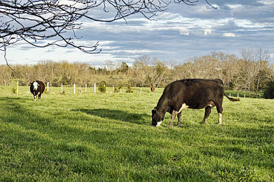 Photograph - Grazing The Back Forty by Cricket Hackmann