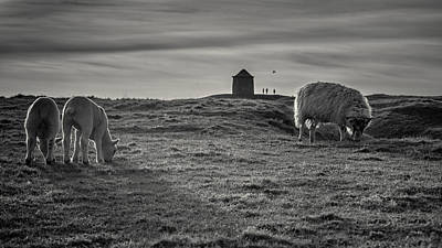 Grazing With The Family Print by Chris Fletcher