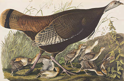 Great Mother Painting - Great American Hen by John James Audubon