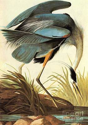 American Eagle Painting - Great Blue Heron by Celestial Images