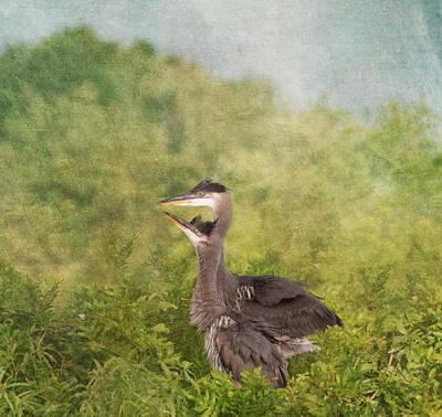 Great Blue Heron Fledglings  Print by Kim Hojnacki
