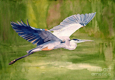Great Blue Heron Print by Pauline Ross