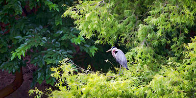 Heron Photograph - Great Blue Heron by Peter Tellone