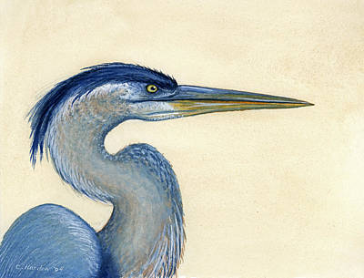 Great Blue Heron Portrait Print by Charles Harden