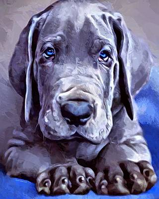 Pup Digital Art - Great Dane Portrait by Scott Wallace