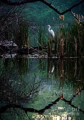Great Egret In Central Park I Print by James Aiken