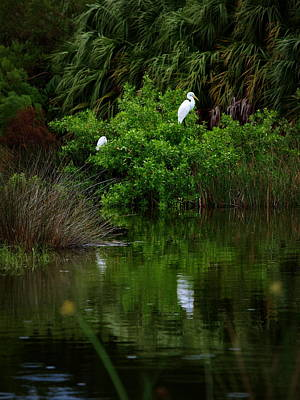 Great Egret Print by James Granberry