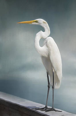 Kim Photograph - Great Egret by Kim Hojnacki