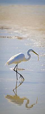 Great Egret With Prey Print by Patrick M Lynch