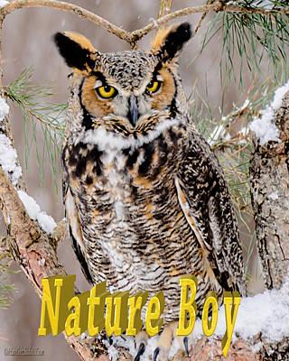 Owl Photograph - Great Horned Owl Nature Boy by LeeAnn McLaneGoetz McLaneGoetzStudioLLCcom