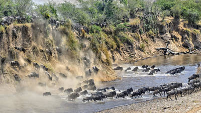 Migration Photograph - Great Migration by Hua Zhu