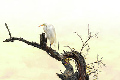 Great White Egret #2 Print by Donnie Smith
