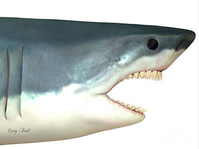 Great White Shark Head Print by Corey Ford