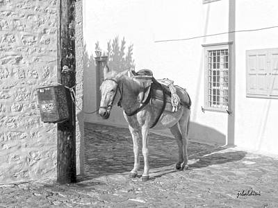 Photograph -  Donkeys Of Hydra Greece by J R Baldini