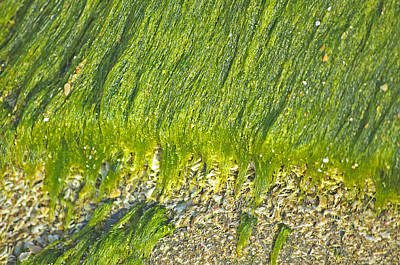 Green Algae On Rock Original by Kenneth Albin