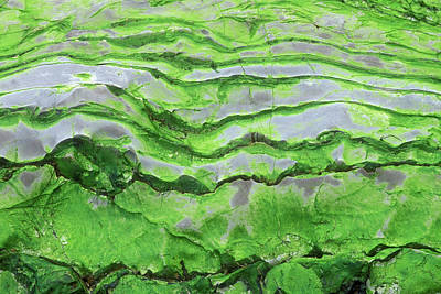 Algae Photograph - Green Algae Patterns On Exposed Rock At Low Tide, Gros Morne National Park, Ontario, Canada by Altrendo Nature