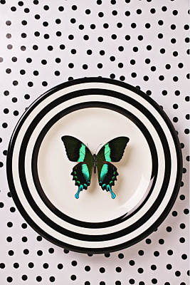 Arthropod Photograph - Green And Black Butterfly On Plate by Garry Gay