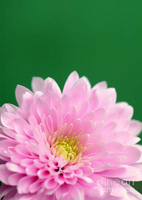 Green And Pink Print by SK Pfphotography