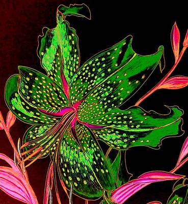 Flower Photograph - Green And Pink Stargazer by Laura Wilson