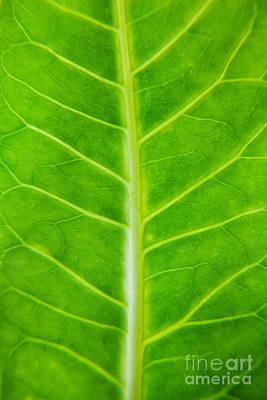 Green Botany -  Part 2 Of 3 Print by Sean Davey