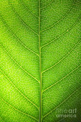 Green Botany -  Part 3 Of 3 Print by Sean Davey