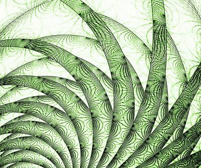 Leaf Digital Art - Green Fern by Anastasiya Malakhova