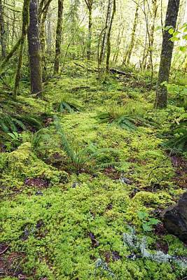Green Foliage On The Forest Floor Print by Craig Tuttle