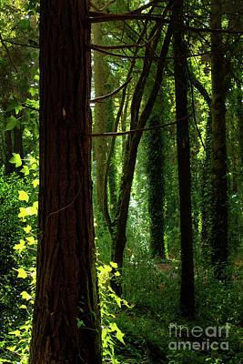Green Forest Print by Carlos Caetano